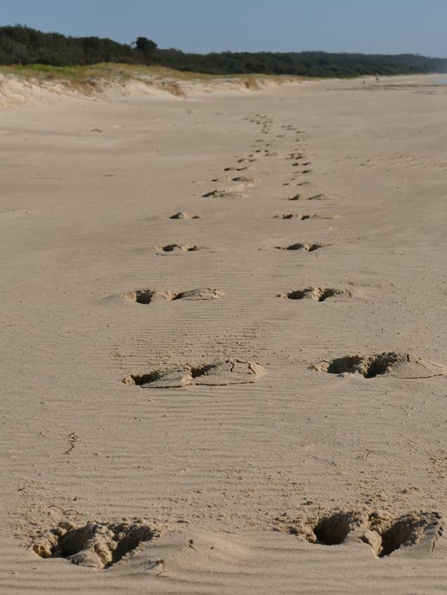 roo track Valla Beach