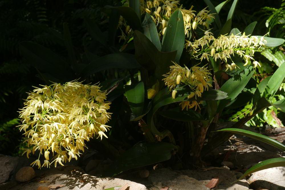 Orchids_CBG