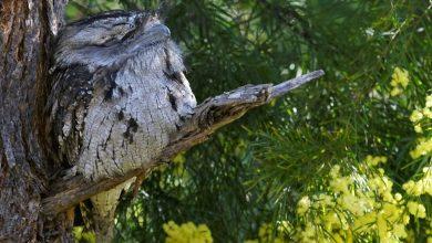 Photo of Recent bird photos