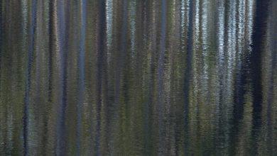 Photo of Yurruun.ga wetlands ~ art as beauty & interesting
