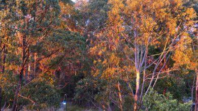 Photo of Narnia in Jaaningbirrany, Sept 28