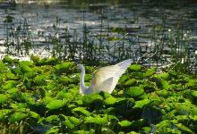 Photo of Birding Sunday Morning, 104 species, Oct 17